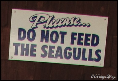 Please do not feed the seagulls sign