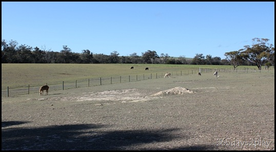 Lavendale Farmland (2)