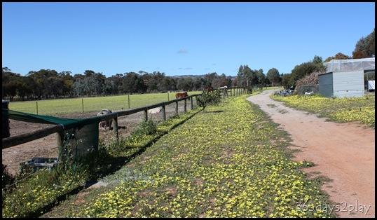 Lavendale Farmland (3)