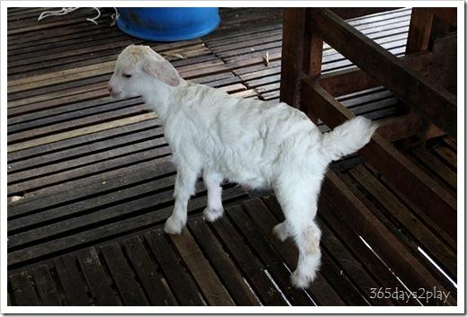 LA Goat Farm (4)
