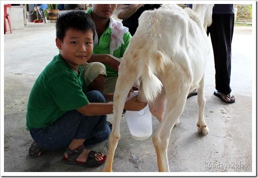 LA Goat Farm